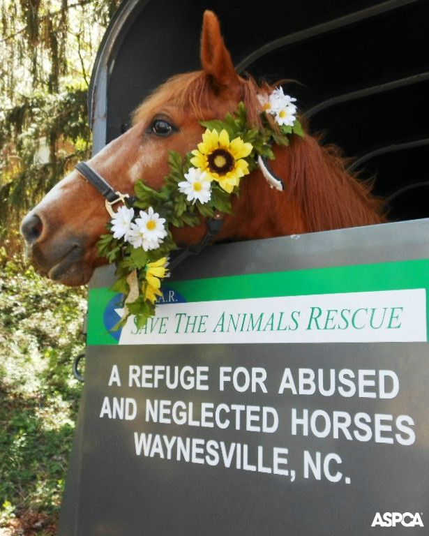 STAR Ranch in Waynesville, NC is one of the winners of our Help a Horse Day Celebration Contest! Over 80 rescues in 32 states held special events to rally their communities around horse welfare. Check out a slideshow of all the winners here: http://www.aspca.org/get-involved/horses/help-a-horse-day-2014