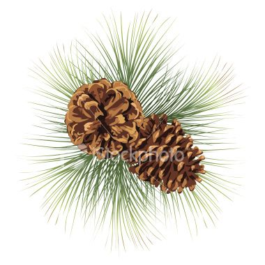 Pine Tree Clip Art Pine Cones Illustration Royalty Free