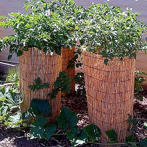 PEKNÉ ZEMIAKY. Predstavme si originálny spôsob pestovania zemiakov. Ideálny je aj pre zalievanie, dlhšie sa udrží vlaha.