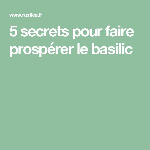 5 secrets pour faire prospérer le basilic