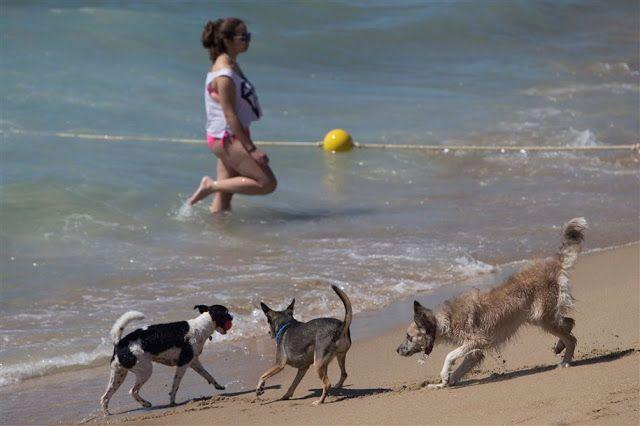 Uma praia para cães em Barcelona :) #cães #animais http://palavrasdoabismo.blogspot.pt/2016/07/boas-ideias-6-uma-praia-para-caes.html