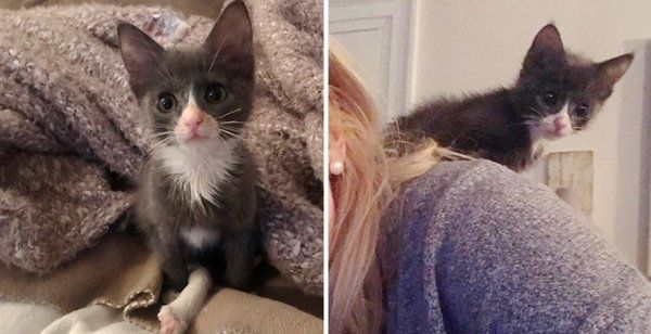 Kitten Born With Extra Long Leg Proves She Can Do Anything Just Like Other Cats Cats Cat Sanctuary Cat Love