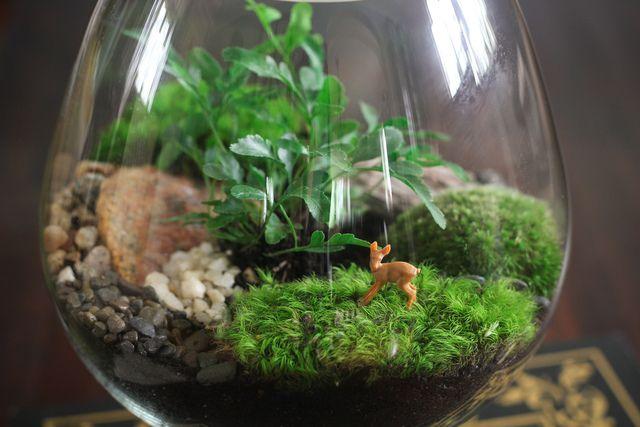Créer un terrarium de plantes : quelles plantes choisir, quel contenant, quel substrat de culture ? Conseils de création et d'entretien.