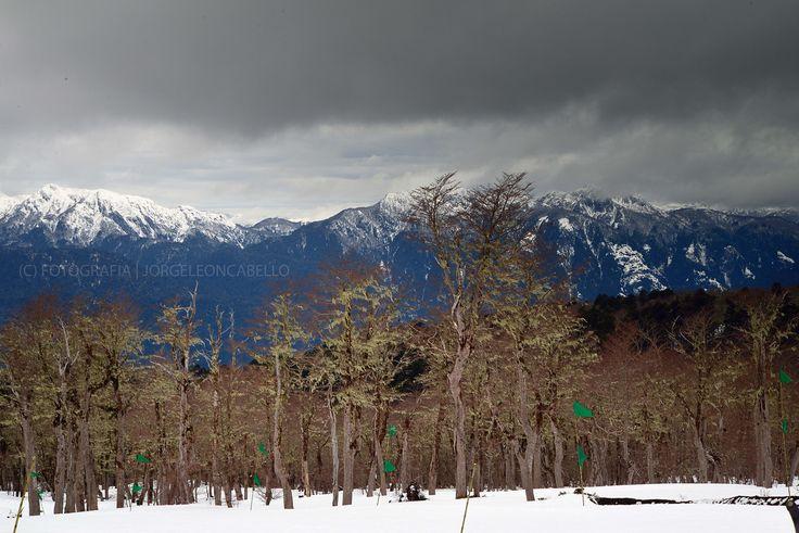Panorámica desde Choshuenco - Reserva Biológica Huilo Huilo (Chile)