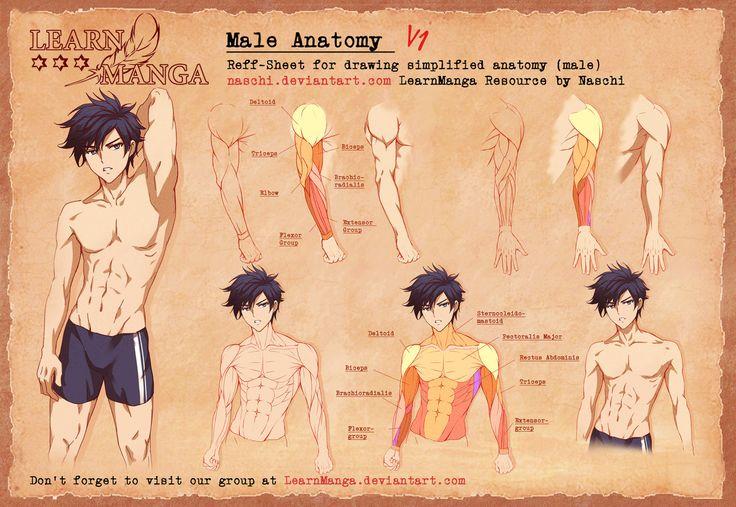 Learn Manga Male Anatomy V1 by Naschi.deviantart.com on @DeviantArt