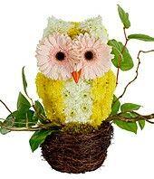Flowers arranged in owl shape........