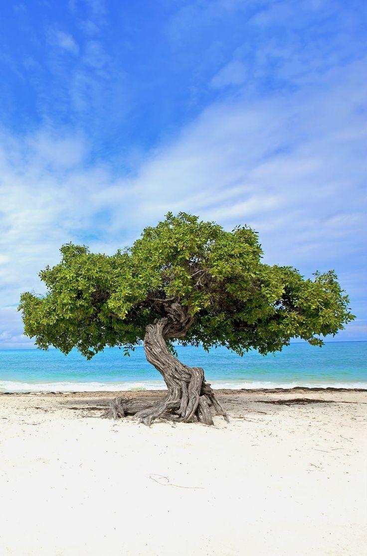 Aruba has an average temperature of 82 degrees.