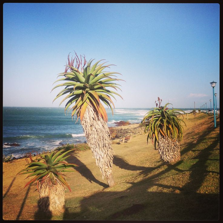 Why I love small towns: An ode to my home town, East London aka Slummies. #slummies #southafrica #writing #home #gossip #smalltown #bigcitylife #easterncape #aloes #nostalgia