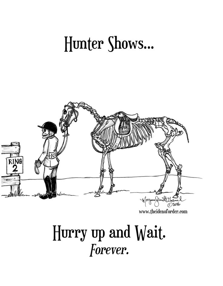 17 Best Images About Horsey Humor On Pinterest Trainers