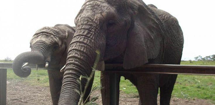 Elephants at the Knysna Elephant Park