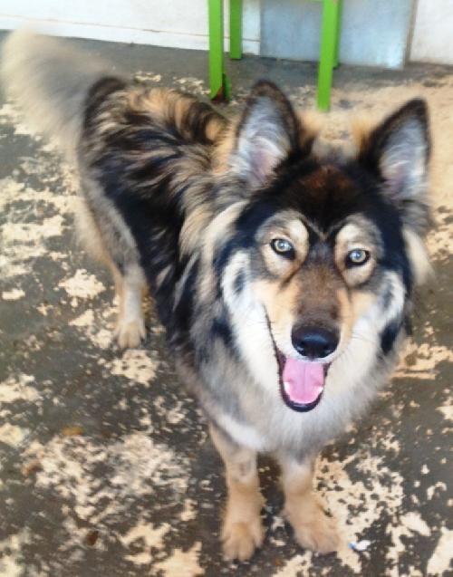 Dog Day Care Walnut Creek Ca