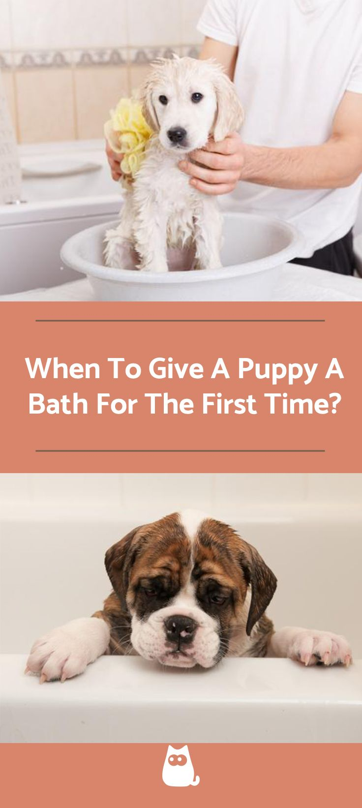 When To Give A Puppy A Bath For The First Time Bathing A Puppy
