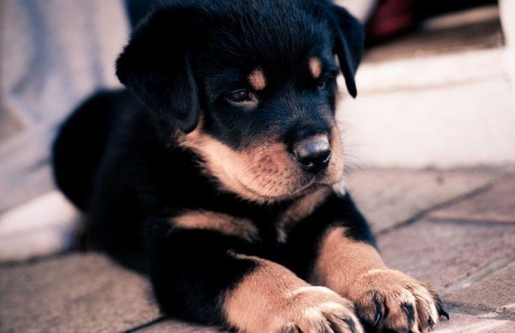 http://evdekopekegitimi.org Köpekler hakkında herşeyi bu siteden öğrenebilirsiniz. Evde köpek eğitimi, köpek tuvalet eğitimi, köpek bakımı, davranış bozuklukları ve daha fazlası... #evde #köpek #eğitimi #eğitim #merkezi