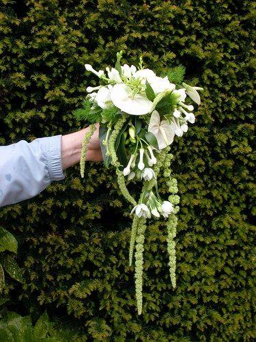 """Voici un bouquet de mariée """"cascade"""" blanc et vert à base d'amaranthe (queue de renard), anthurium blanc, stéphanotis blanc et feuillage."""