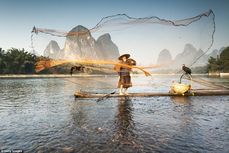 An old fisherman, wearing the traditional outfit, is throwing his net out over…