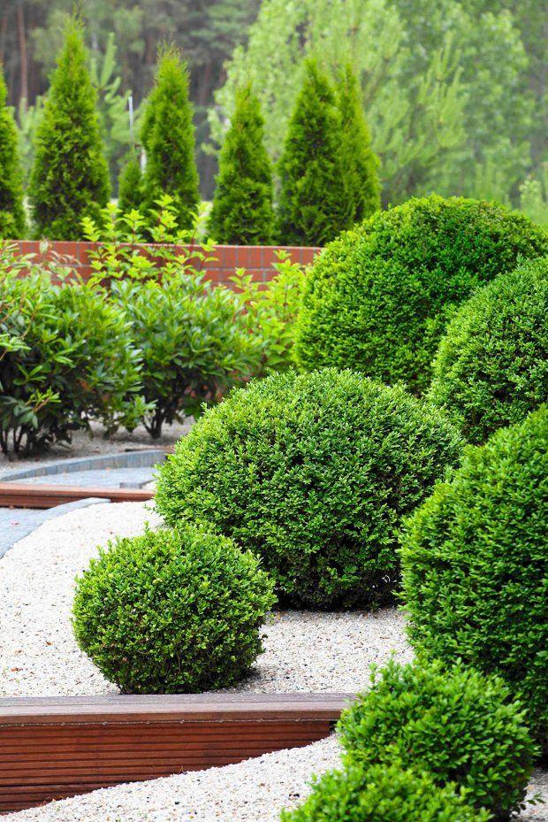 Projektant zieleni
