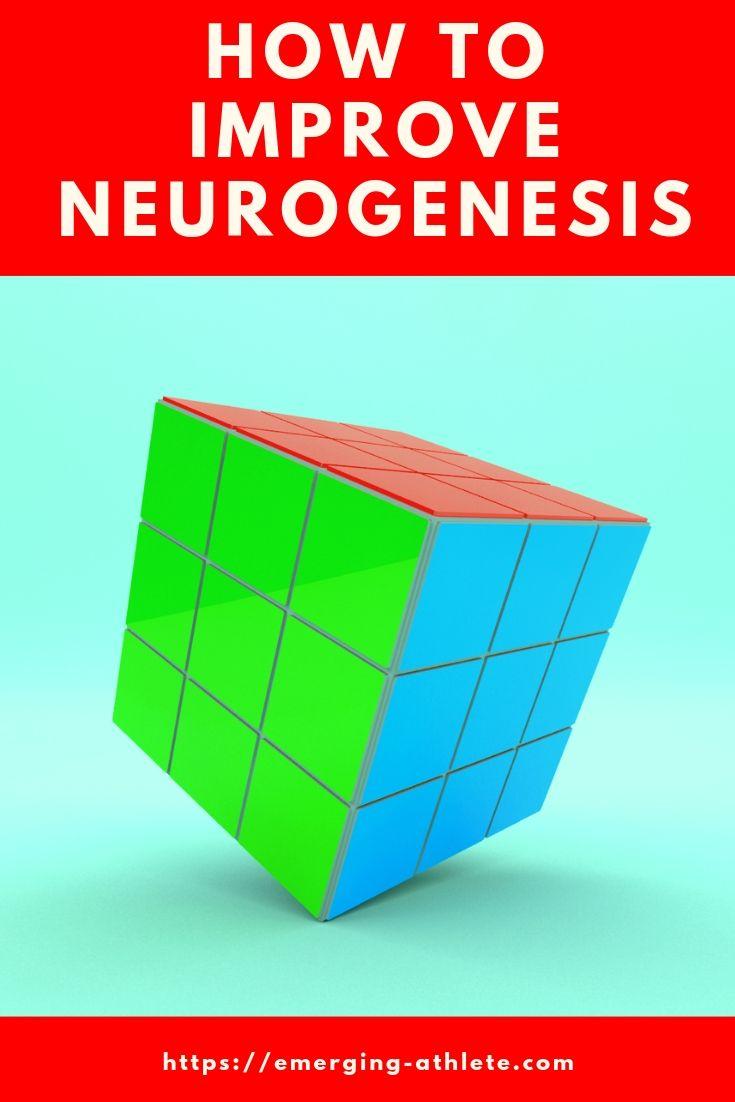 9 Practical Ways To Increase Neurogenesis | Productivity