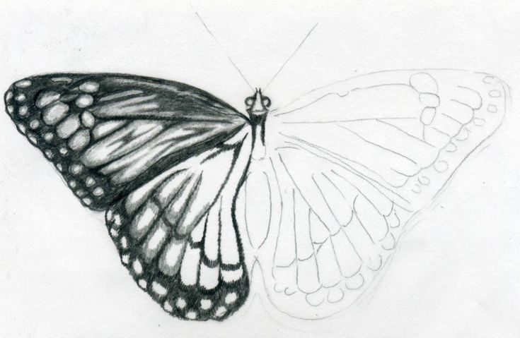 Easy Butterfly Drawings ~ Jus 4 kidz