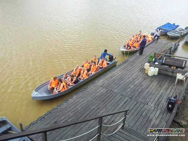 On the first afternoon the group arrive at their river lodge, they immediately join a wildlife safari river cruise on the Kinabatangan! :)