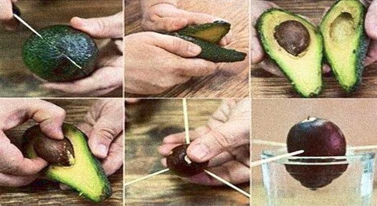 Here's a step-by-step guide to growing your own avocado tree. Avocadosare highly nutritious and flavored, whether we're talking about salad,guacamole, or straight…