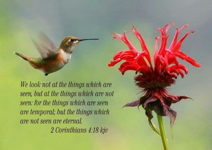Image result for 2 corinthians 4:18 kjv