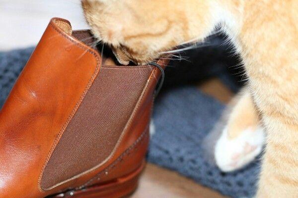#yanko #yankoshoes #cat #gamon #yankostyle #yankolover #yankoWMNS #yankoboots #shoes #shoe #buty #shoeslover #shoestagram #shoeporn @patinepl #patine #patinepl #classic #fashion #fashionlover #cashmere @pravaeloevae #cashmerescarf #cats #butyklasyczne #obuwie #goodyearwelted #luxury