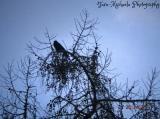 Section-Animals-Birds