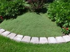 Use thyme as a lawn! It's fragrant, doesn't require mowing, and only needs occasional weeding once it takes over the space.