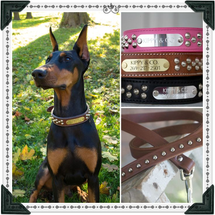 Thanks so much for snoops collar! He looks so handsome in it :) http://www.kippyandco.com/products/leather-cone-stud-dog-collar