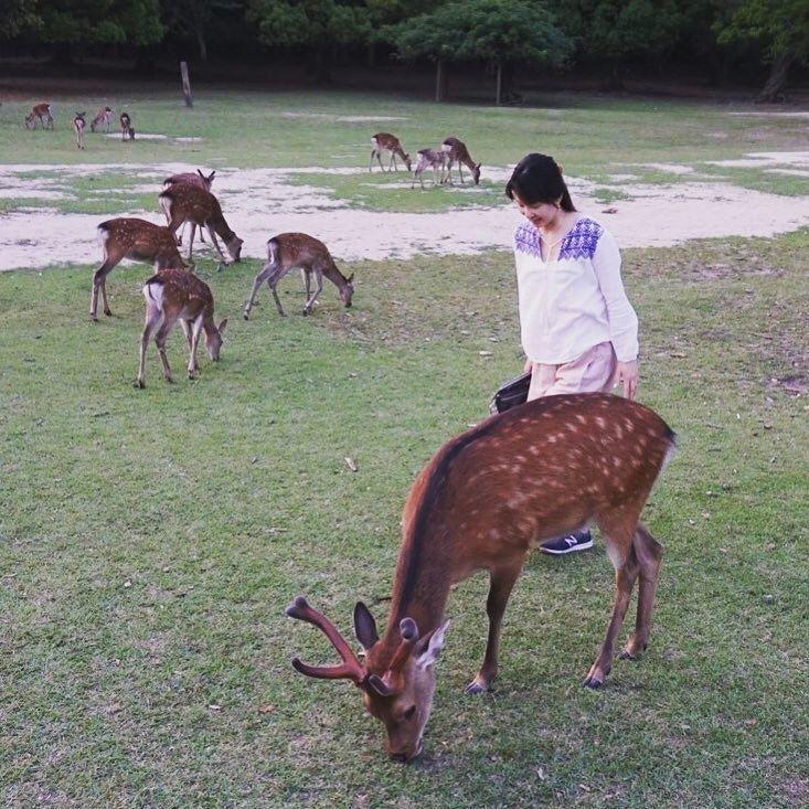 久しぶりに奈良へ来ました世界ふしぎ発見で春日大社をやっていたから予習はばっちり鹿は外人さんに大人気私もいちよう #奈良 #日本 #nara #japan #japantrip #アトリエ由花 #国内旅行 #鹿 #春日大社 #bear