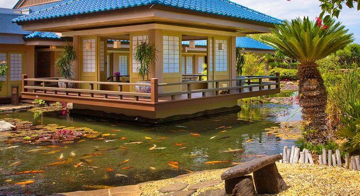 Hawai'i recommendation. Teppanyaki Japanese Restaurant - Imari  Great sushi.