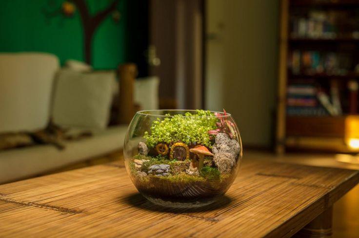 Terariu plante, decoratiune plante naturale
