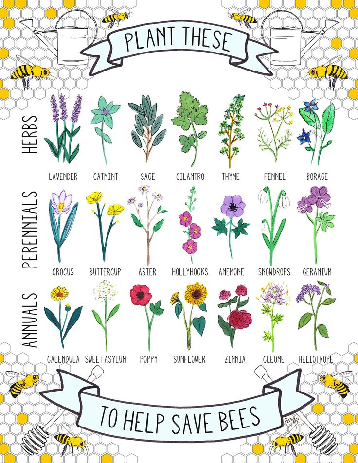 byhannahrosengren:  Plant These To Help Save Bees: 21 Bee-Friendly Plants. Learn more here! Hannah Rosengren 2013
