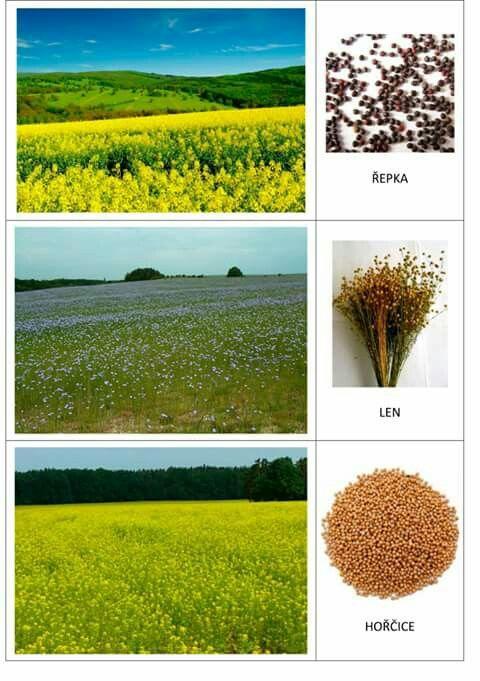 Plodiny z polí