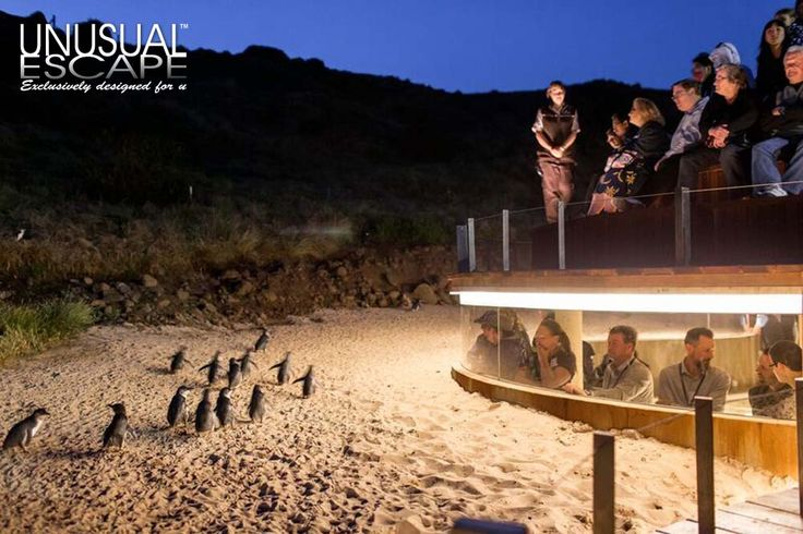 Penguine Parade Underground