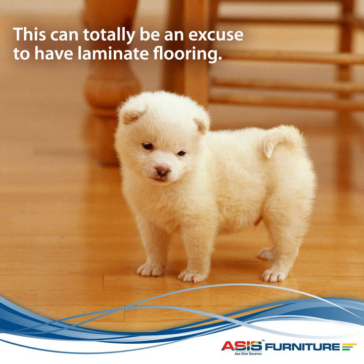 Did you know pets can look animated while not actually moving anywhere. This is an effect of laminate flooring. Although it is often advised to have a camcorder at hand to record the ensuing comical moment. ‪#‎FurnitureFact‬ ‪#‎FunnyFacts‬