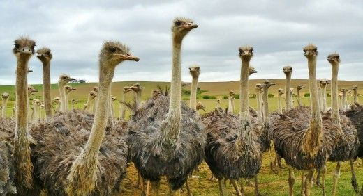 Ostrich Farming and other unusual species. There are a lot of specialty markets.