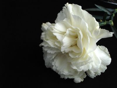 236 best Flowers (Want to learn more) images on Pinterest ...
