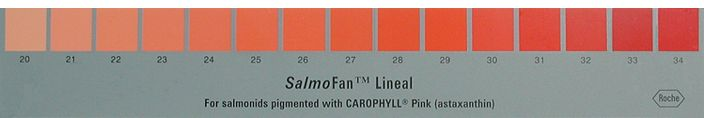 Edward Tufte forum: What color is your salmon, flamingo, leaf, soil, golden retriever, yolk, beer, diesel fuel? Measuring color in the field...