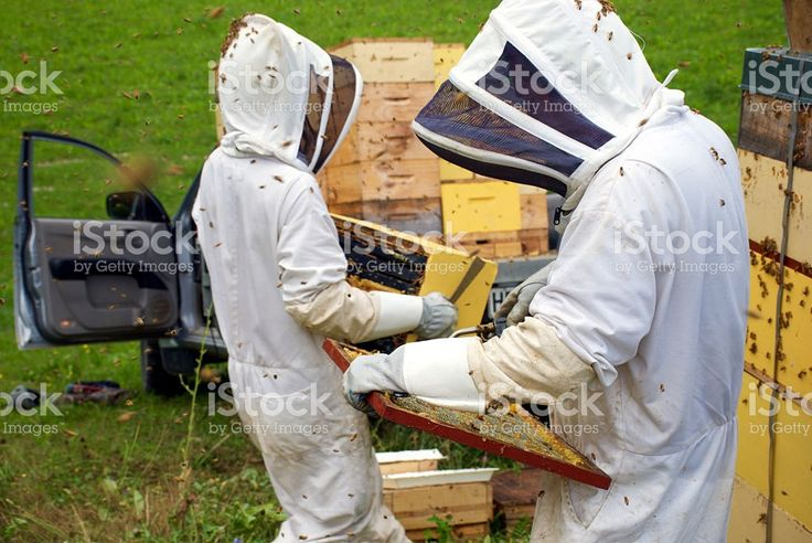 Commercial Beekeepers with Beehives royalty-free stock photo