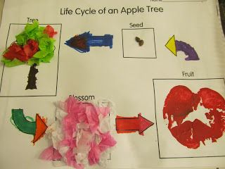 Life cycle of an apple tree and awesome apple unit.