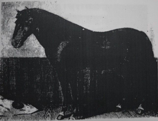 Nanbu horse. Extinct Japanese heavy breed. 南部馬の歴史3 | 青森の魅力
