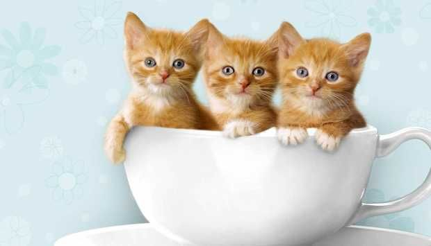 تفسير رؤية القطط الصغيرة في المنام للعزباء القطة القطة الشرسة القطط القطط الصغيرة Kittens Cutest Tiny Cats Kitten Pictures