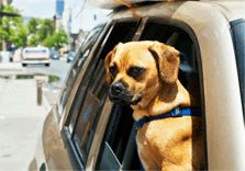 Moving to another state and unsure about pet transportation? Here's all you need to know about pet transportation services in India and how to get it right