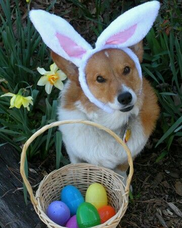 50 best hoppy easter images on pinterest easter bunny adorable easter pet photos from martha negle Images
