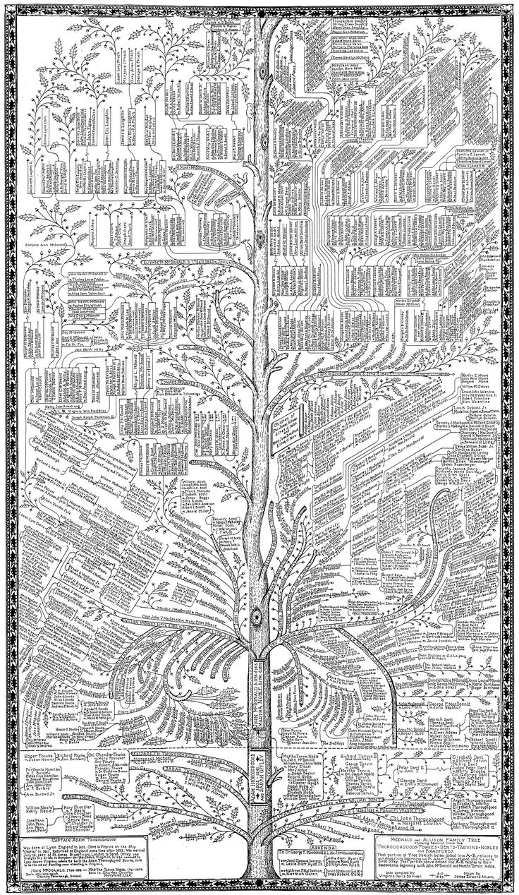 Tree Drawings best 20+ family tree drawing ideas on pinterest | family trees