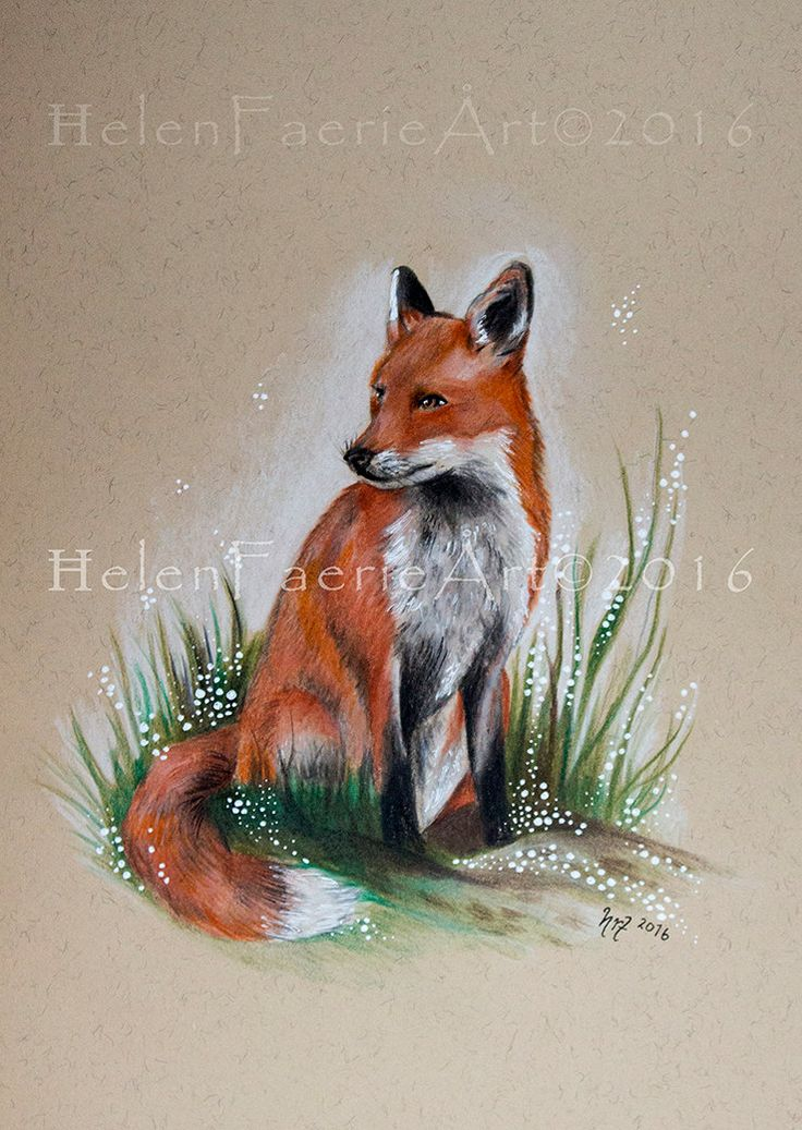Small Print (5 x 7 inches)  From my original Pencil Drawing 'Forest Fox' Fox, Foxes, Wildlife, Nature, Forest, Drawing, Art, Charity by HelenFaerieArt on Etsy
