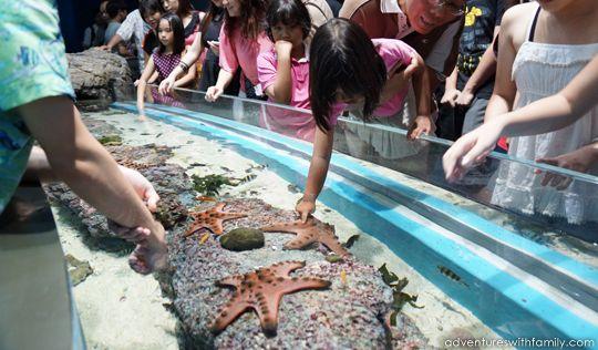 S.E.A Aquarium, Marine Life Park, Sentosa, Singapore