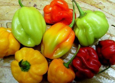 ... on Pinterest | Texas gardening, Hot sauce recipes and Pepper jelly