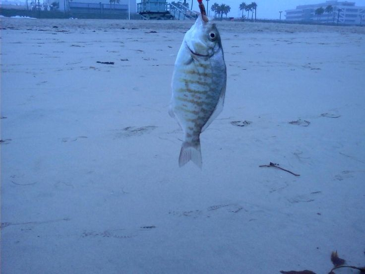 1000 images about california best surf fishing spots on for Best fishing spots in california
